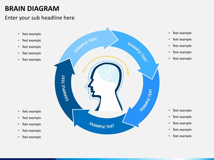 Brain Diagram PowerPoint Template   SketchBubble