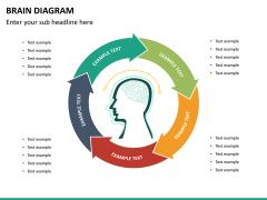 Brain diagram PPT slide 13