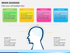 Brain diagram PPT slide 1
