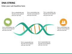 DNA string PPT slide 12