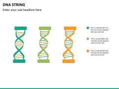 DNA string PPT slide 13