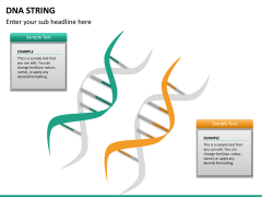 DNA string PPT slide 14