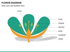 Flower diagram PPT slide 24