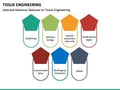 Tissue Engineering PPT Slide 28