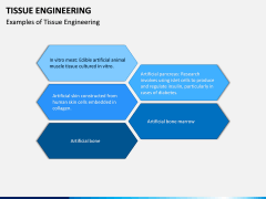 Tissue Engineering PPT Slide 12