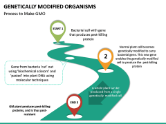 Genetically Modified Organisms (GMO) PPT Slide 16