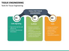 Tissue Engineering PPT Slide 20