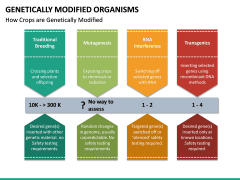Genetically Modified Organisms (GMO) PPT Slide 24