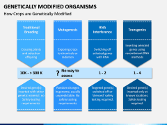 Genetically Modified Organisms (GMO) PPT Slide 11