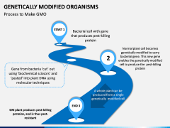 Genetically Modified Organisms (GMO) PPT Slide 3